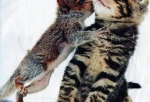 squirrel kissing kitty