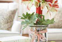 vánoční amarelis