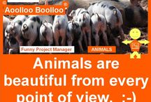 Aoolloo Boolloo Animals / Aoolloo Boolloo Animals