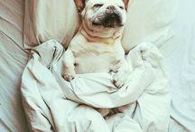 Cute IN BED