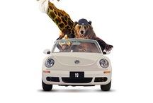 beetle / car