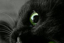 animals_^^