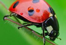 animale, pasari, insecte color