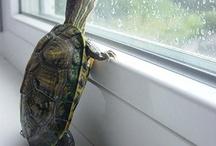 Turtles / by Ashley {Maniac Mom}