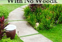 4 things for a weed free lawn.