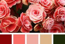 Color y más color / Combinación de colores para diseño.