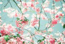 Belles fleures