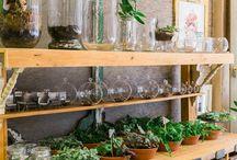 Terrariums + air plants