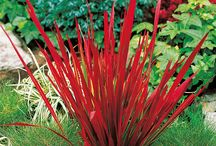 Garden Blades Addiction / Variety of Ornamental Grasses / by Lawncare Plus Design~Landscaping Hardscaping Patios Gardening