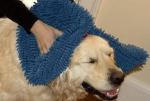 Doggie Products / From tags, to socks, to special towels, these things are all handy for dog owners.