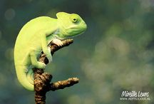 REPTILES / All about snakes, dragons and giant and small lizards