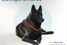 Breed All About It / Dog Breeds and Link to Health Concerns / by Cross Creek Animal Medical Centre