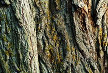 pieces of nature / #textures, #photography, #nature