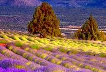 PROVENCE <3 <3 <3