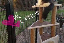 Catios