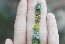 The plant world. / Everything about desert plants and succulents
