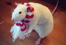 Rats!! ❤️