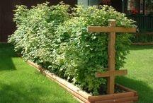 Berry garden