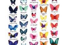 Entomology / Moths, butterflies, skeleton wings and Mister Finch!
