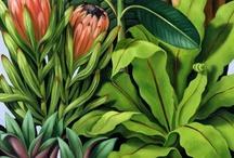 Ilustracion vegetal