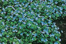Puutarhan kukat