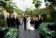 Chicago Wedding at the Crystal Gardens / Take a peek at past weddings at the Crystal Gardens. Get ideas for your Chicago weddings at the best wedding venue on Navy Pier Chicago.