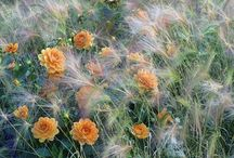 őszi évelő kert - autumn, fall perennials, border