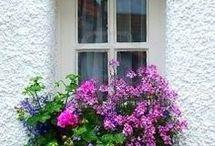 pencere cicekleri