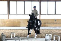 Ridelære og hestekunnskap