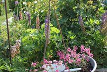 Gardening  / by Kay Farrelly