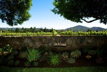 Napa Valley Elopement Perfectly Priced