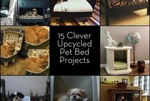 Pet Bed Ideas / by Chris Brown