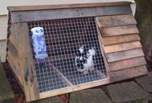 rabbit breeding