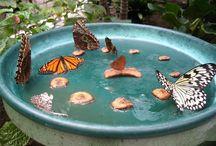 Garden feeders