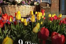 How Does Your Garden Grow? / Gardening