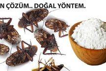 İstenmeyen böcekler