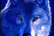 волки.анимация