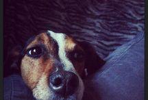 Mela / Il mio adorato cane