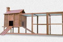 Hobby - Vege Garden and Chickens / My ultimate Vege Garden ideas and chicken Houses