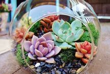 Succulents Decorations / Succulent plants are easy to care for and are beautiful in DIY arrangements. Here are some fun ideas.