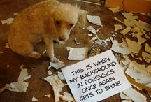 Dog Boasting / Like humans, dogs sometimes have reasons to feel guilty. But just like humans, dogs usually have a lot of reasons to feel proud, too. That's why the following photos have had their former confessions wiped clean so that the dogs can now brag, crow, and even outright gloat.