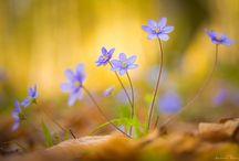 The flowers I like!! / by Maria Elena