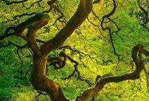 Nature / Tree of life