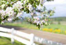 ·Spring·