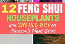 House Plants to buy