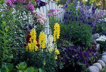 amenajari gradina flori
