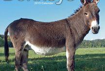 2015 Donkeys Calendar / by MegaCalendars.com