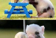 Pocieszne zwierzaki :)