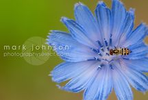 Nature / Nature Photography by Mark L. Johnson http://photographyselect.com