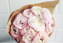 Florist Art - Rununculus